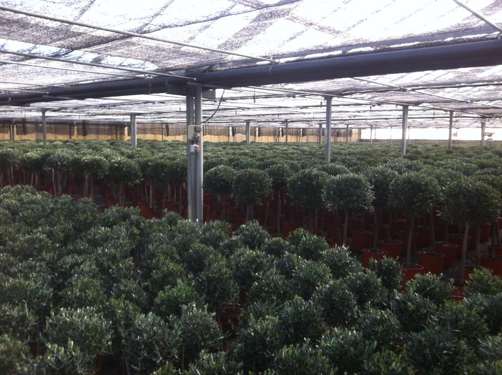 Les arrivages les jardins de la pointe for Vente vegetaux