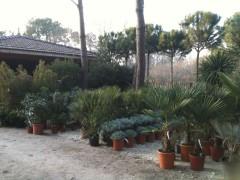 vente plantes, 33